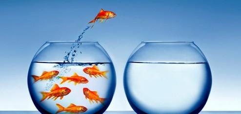 Dois aquários