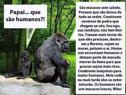 A lição do macaco